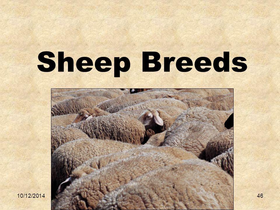 10/12/201446 Sheep Breeds