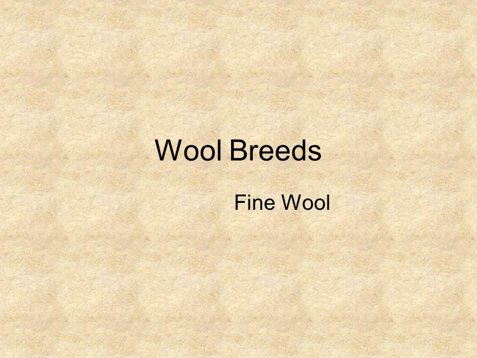 Wool Breeds Fine Wool