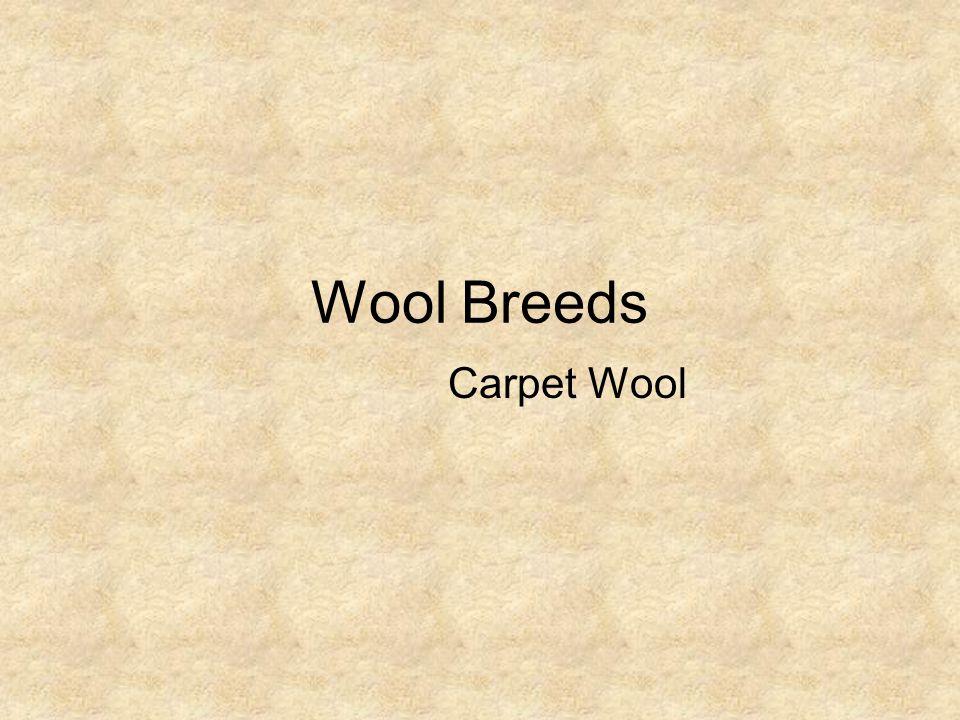 Wool Breeds Carpet Wool