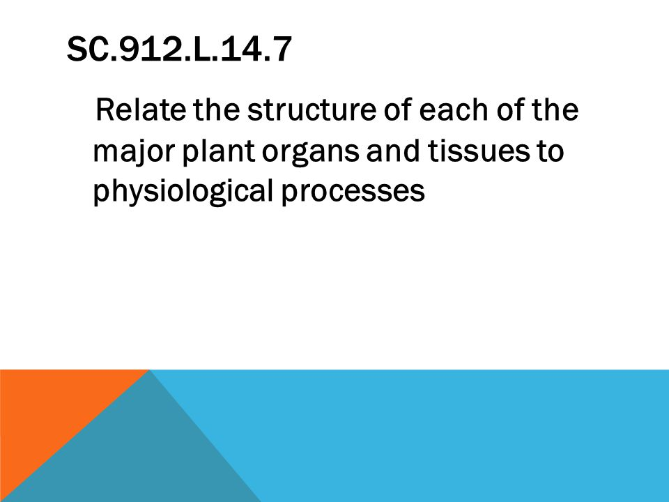 SC.912.L.14.7 Relate the structure of each of the major plant organs and tissues to physiological processes