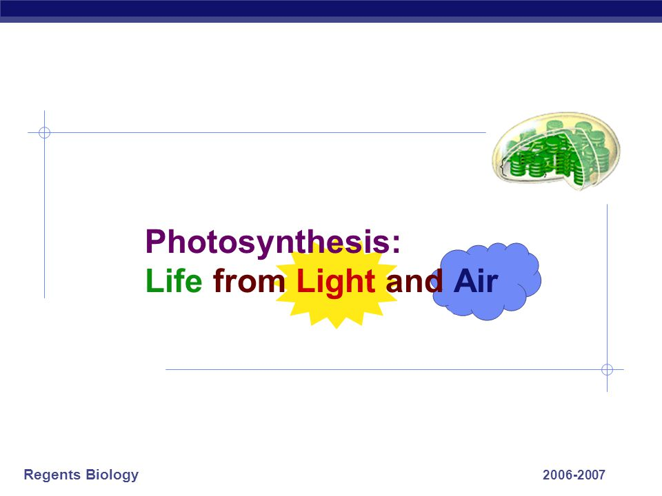 Regents Biology Putting it all together  Making a living…  sunlight  leaves = solar collectors  photosynthesis  gases: CO 2 in & O 2 out  stomates = gases in & out H2OH2O  roots take in water from soil  pulled up by leaf evaporation  nutrients  roots take in from soil