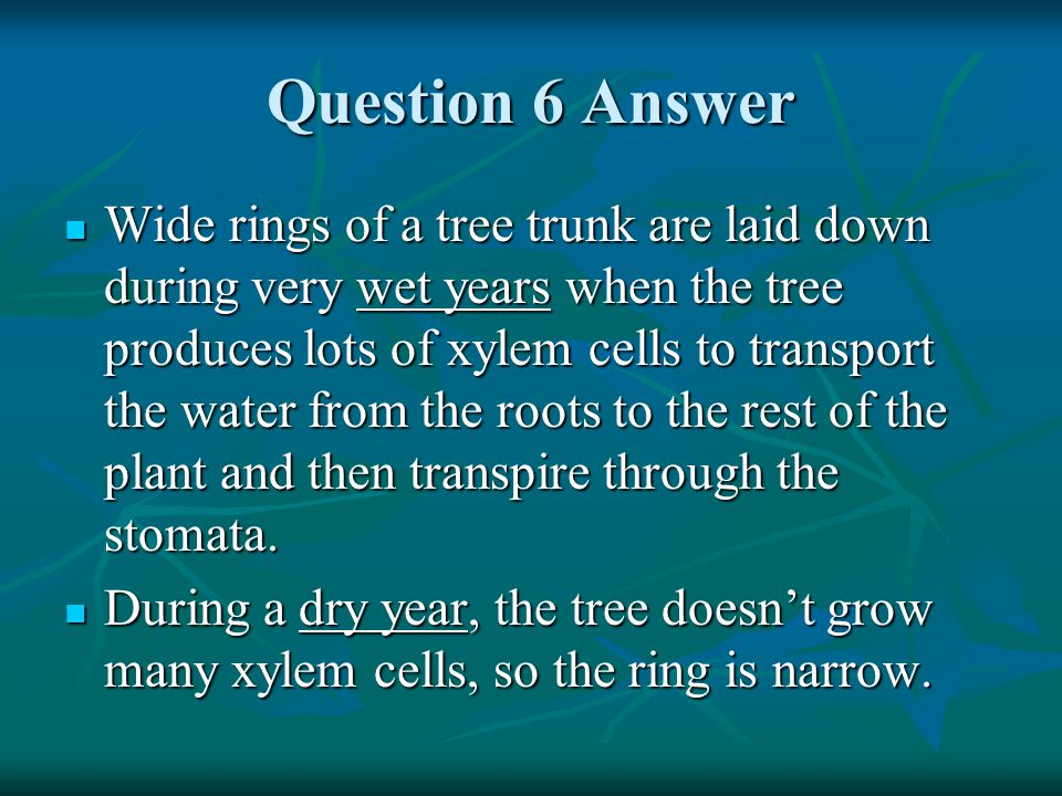 Question 7 How is the vascular system of plants like the circulatory system of humans.