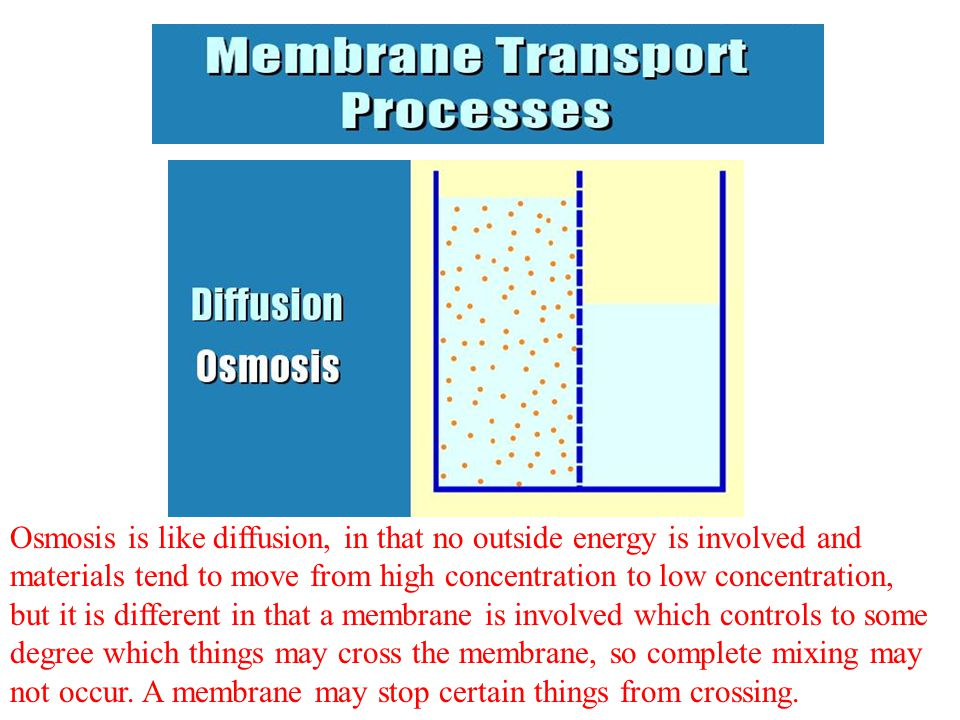 Osmosis is like diffusion, in that no outside energy is involved and materials tend to move from high concentration to low concentration, but it is di