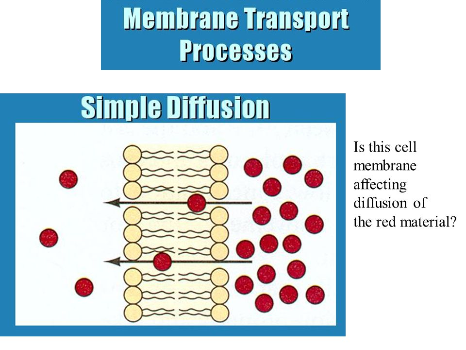 Is this cell membrane affecting diffusion of the red material?