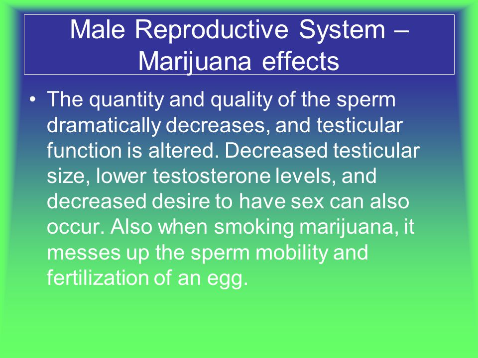 Male Reproductive System – Marijuana effects The quantity and quality of the sperm dramatically decreases, and testicular function is altered. Decreas