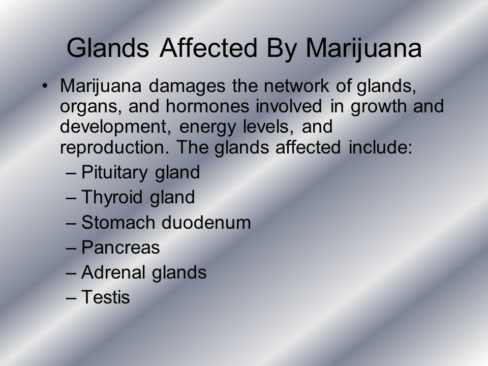 Glands Affected By Marijuana Marijuana damages the network of glands, organs, and hormones involved in growth and development, energy levels, and repr