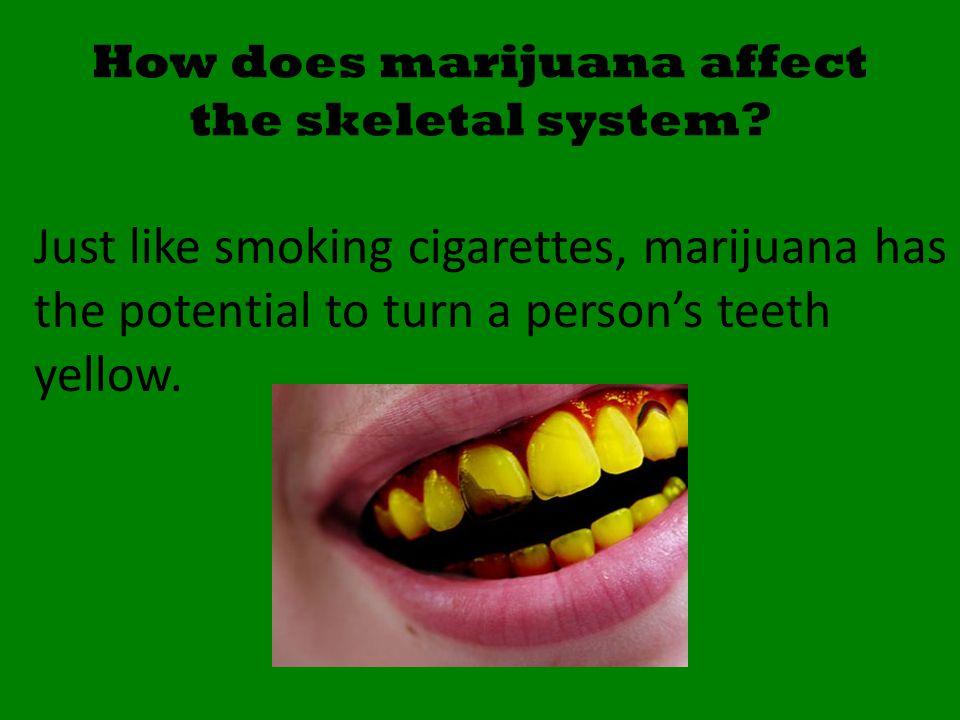 How does marijuana affect the skeletal system.