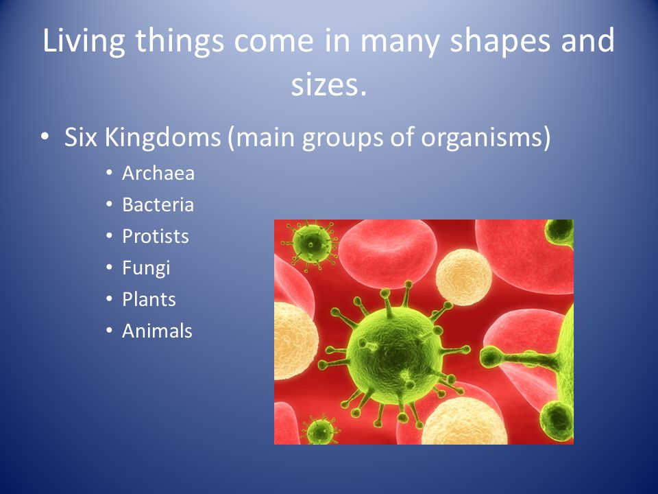 Living things share common characteristics.