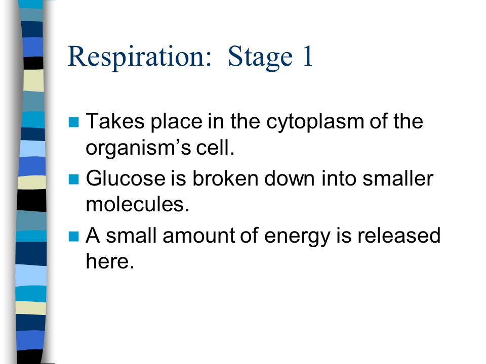 Respiration: Stage 1 Takes place in the cytoplasm of the organism's cell. Glucose is broken down into smaller molecules. A small amount of energy is r
