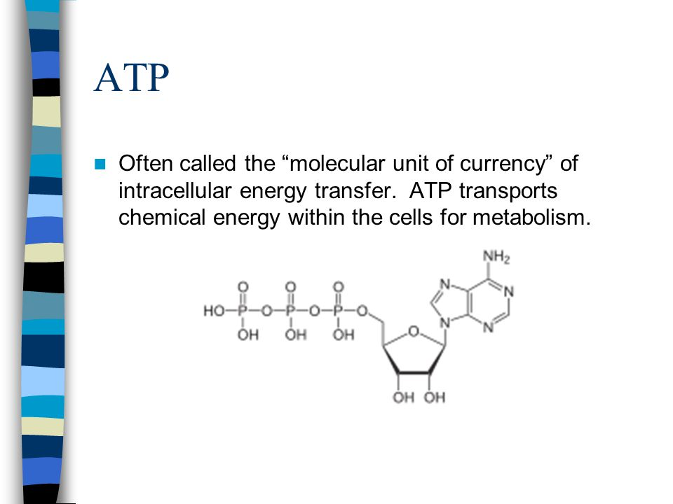 """ATP Often called the """"molecular unit of currency"""" of intracellular energy transfer. ATP transports chemical energy within the cells for metabolism."""
