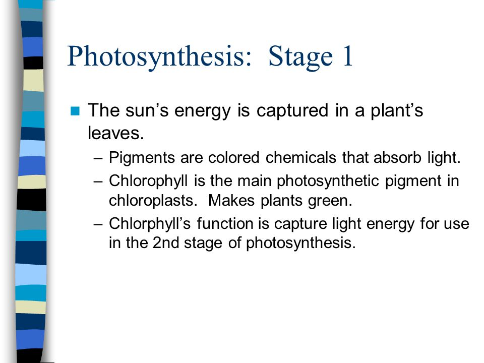 Photosynthesis: Stage 1 The sun's energy is captured in a plant's leaves.