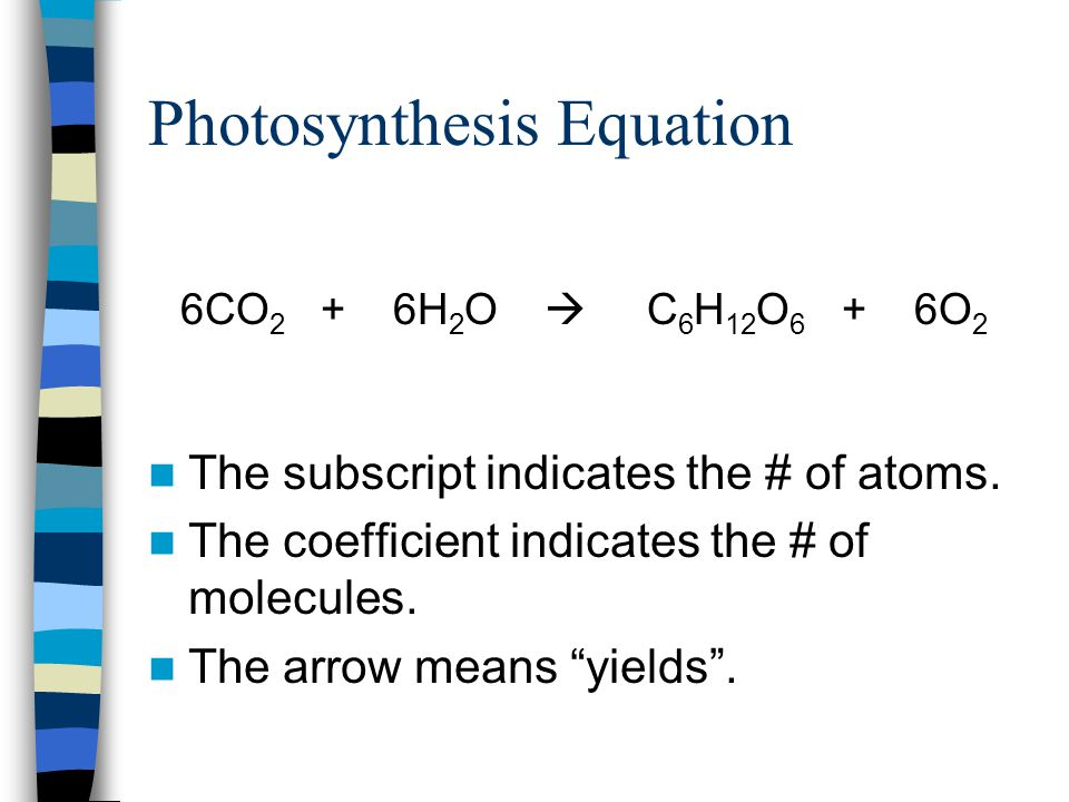 """Photosynthesis Equation The subscript indicates the # of atoms. The coefficient indicates the # of molecules. The arrow means """"yields"""". 6CO 2 + 6H 2 O"""