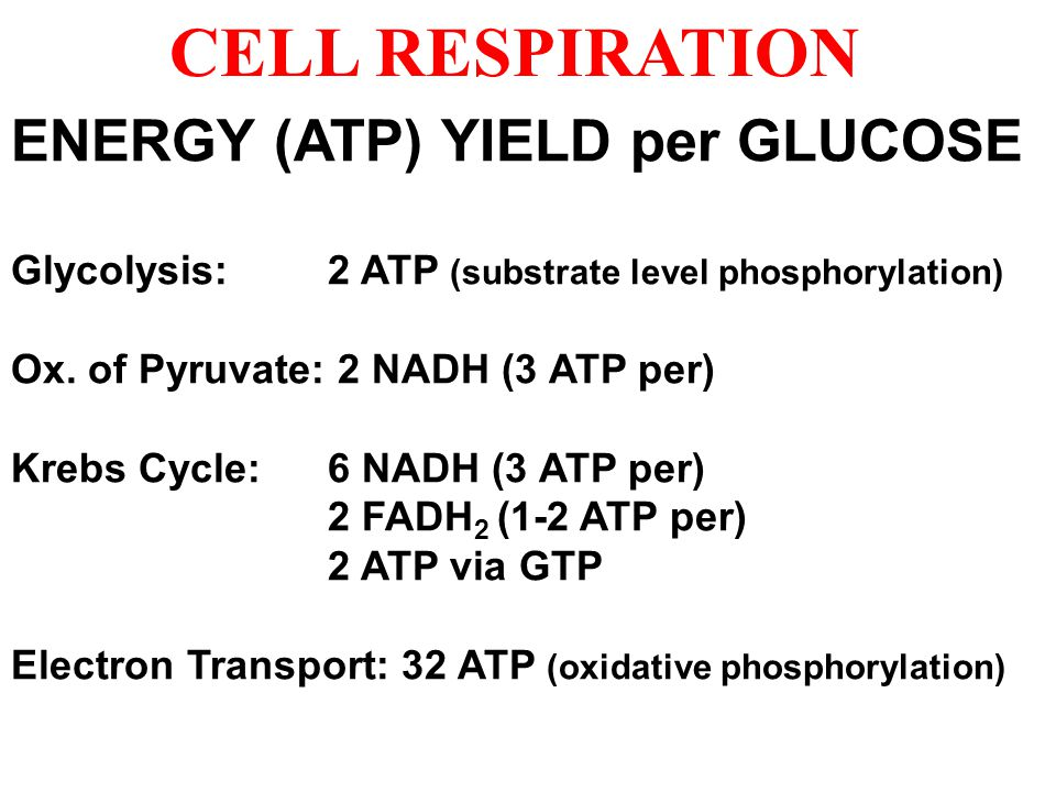 CELL RESPIRATION ENERGY (ATP) YIELD per GLUCOSE Glycolysis: 2 ATP (substrate level phosphorylation) Ox.