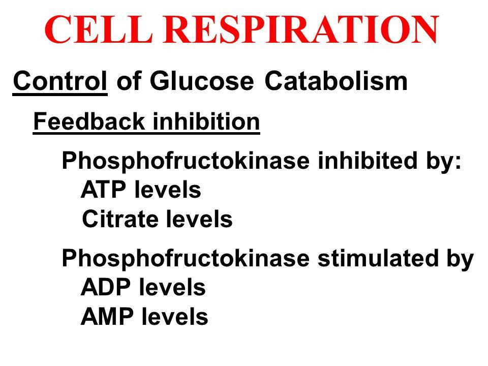 Control of Glucose Catabolism Feedback inhibition Phosphofructokinase inhibited by: ATP levels Citrate levels Phosphofructokinase stimulated by ADP le