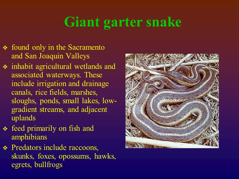 Giant garter snake  found only in the Sacramento and San Joaquin Valleys  inhabit agricultural wetlands and associated waterways.