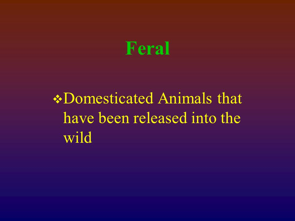 Feral  Domesticated Animals that have been released into the wild