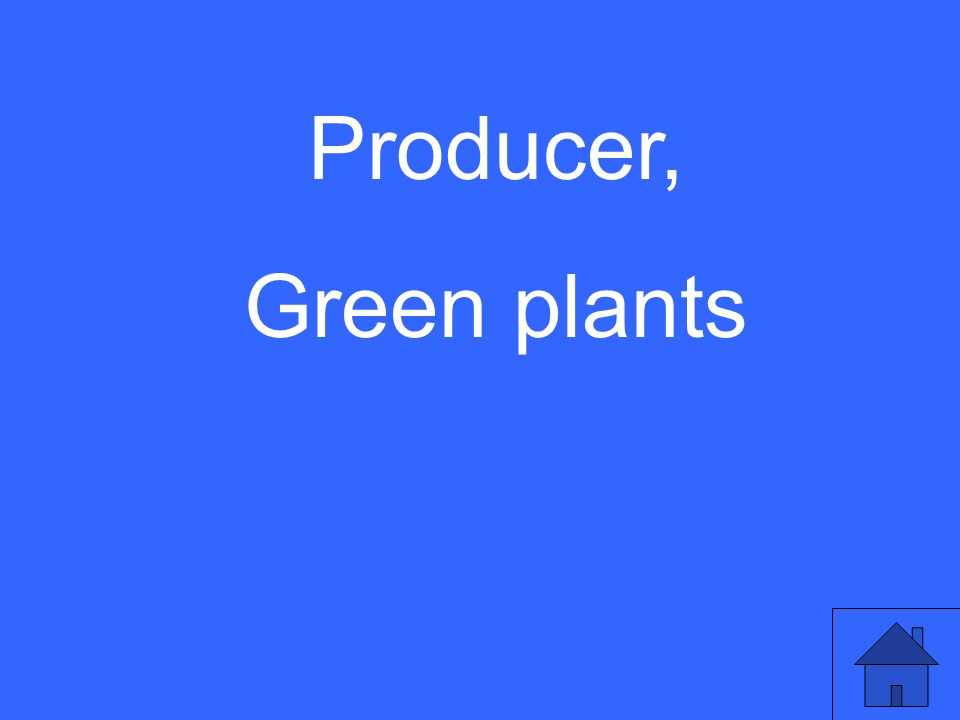 Producer, Green plants