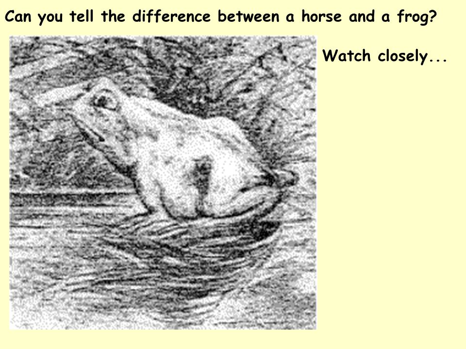 Can you tell the difference between a horse and a frog? Watch closely...