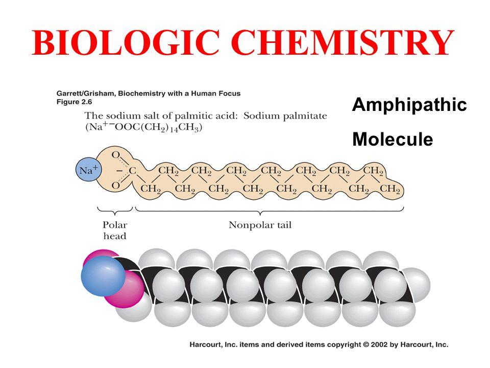 Amphipathic Molecule BIOLOGIC CHEMISTRY