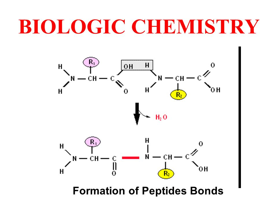 Formation of Peptides Bonds