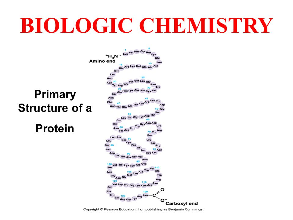 BIOLOGIC CHEMISTRY Primary Structure of a Protein