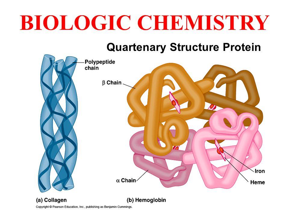 BIOLOGIC CHEMISTRY Quartenary Structure Protein