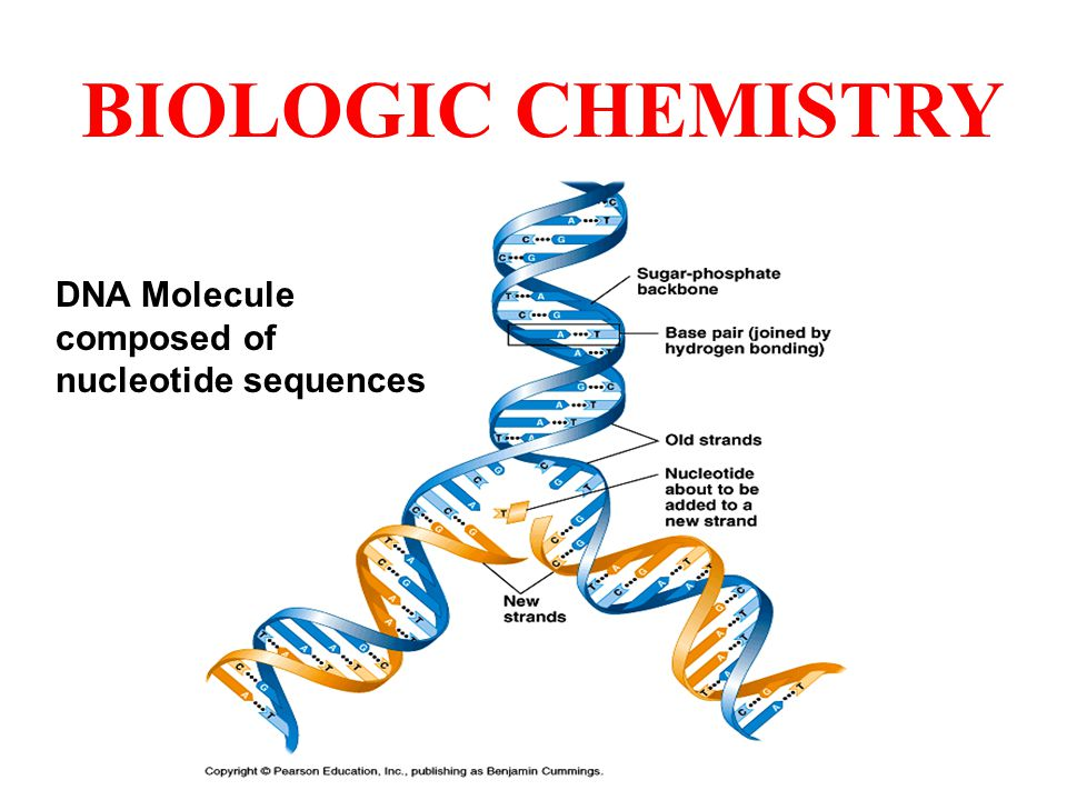 BIOLOGIC CHEMISTRY DNA Molecule composed of nucleotide sequences