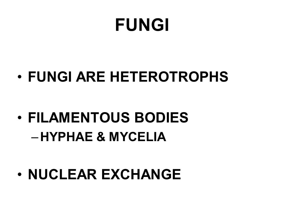 FUNGI FUNGI ARE HETEROTROPHS FILAMENTOUS BODIES –HYPHAE & MYCELIA NUCLEAR EXCHANGE