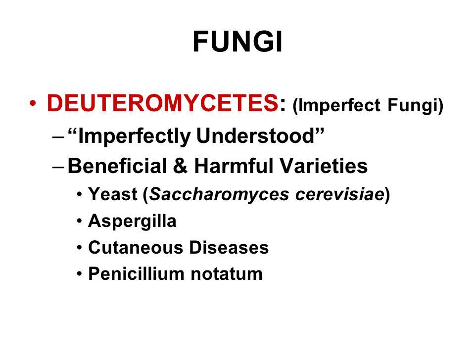 "FUNGI DEUTEROMYCETES: (Imperfect Fungi) –""Imperfectly Understood"" –Beneficial & Harmful Varieties Yeast (Saccharomyces cerevisiae) Aspergilla Cutaneou"