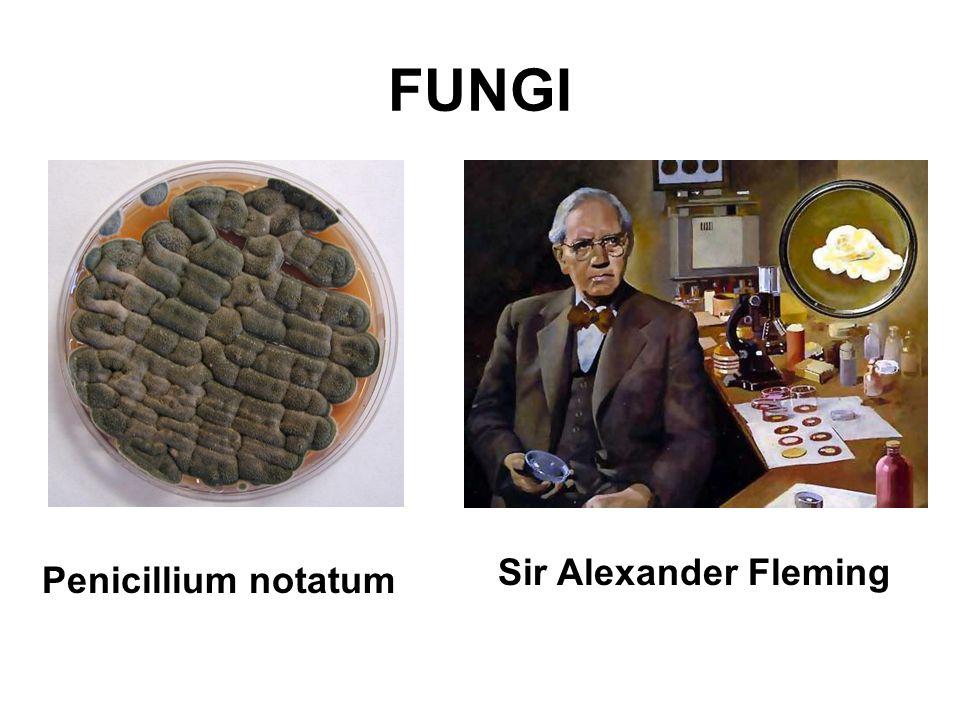FUNGI Penicillium notatum Sir Alexander Fleming