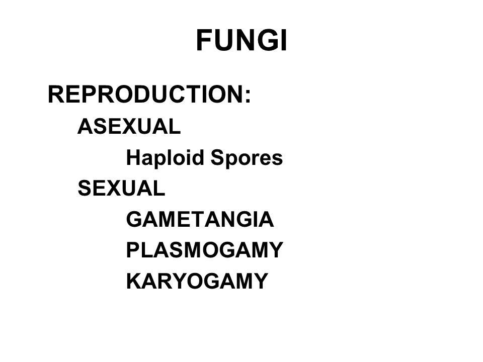 REPRODUCTION: ASEXUAL Haploid Spores SEXUAL GAMETANGIA PLASMOGAMY KARYOGAMY