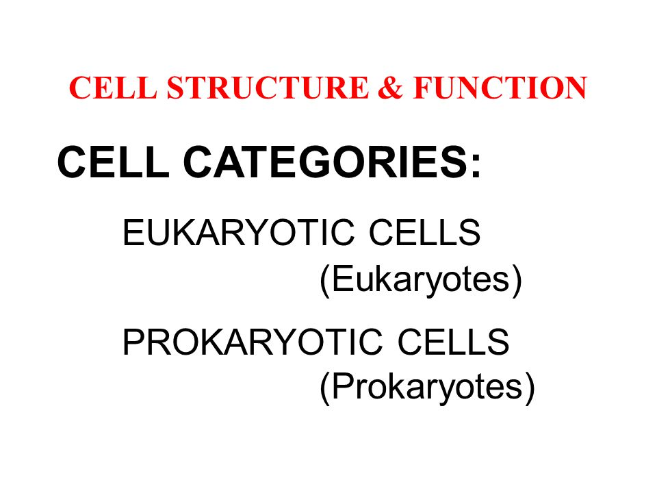 CELL STRUCTURE & FUNCTION CELL CATEGORIES: EUKARYOTIC CELLS (Eukaryotes) PROKARYOTIC CELLS (Prokaryotes)