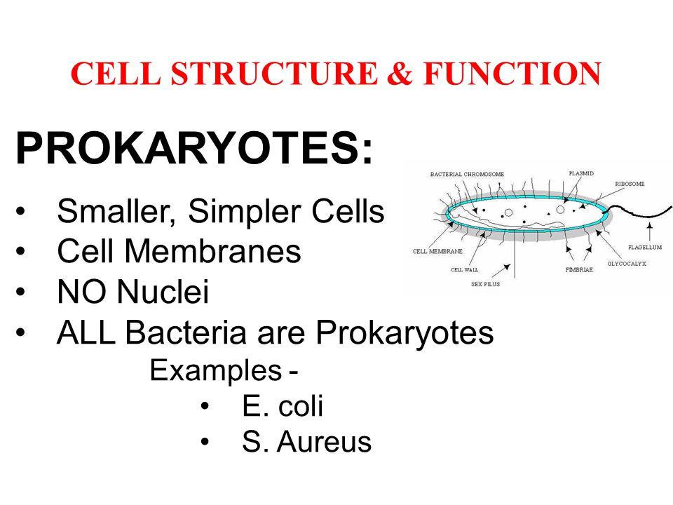 PROKARYOTES: Smaller, Simpler Cells Cell Membranes NO Nuclei ALL Bacteria are Prokaryotes Examples - E. coli S. Aureus