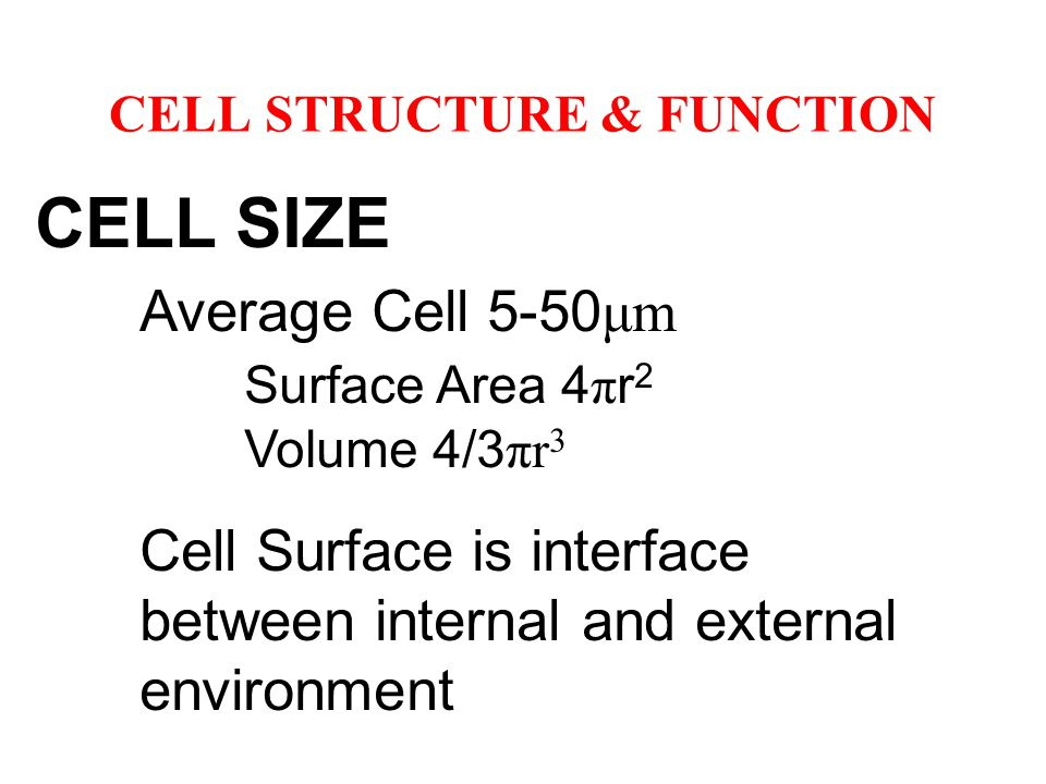 CELL STRUCTURE & FUNCTION CELL SIZE Average Cell 5-50 μm Surface Area 4 π r 2 Volume 4/3 πr 3 Cell Surface is interface between internal and external