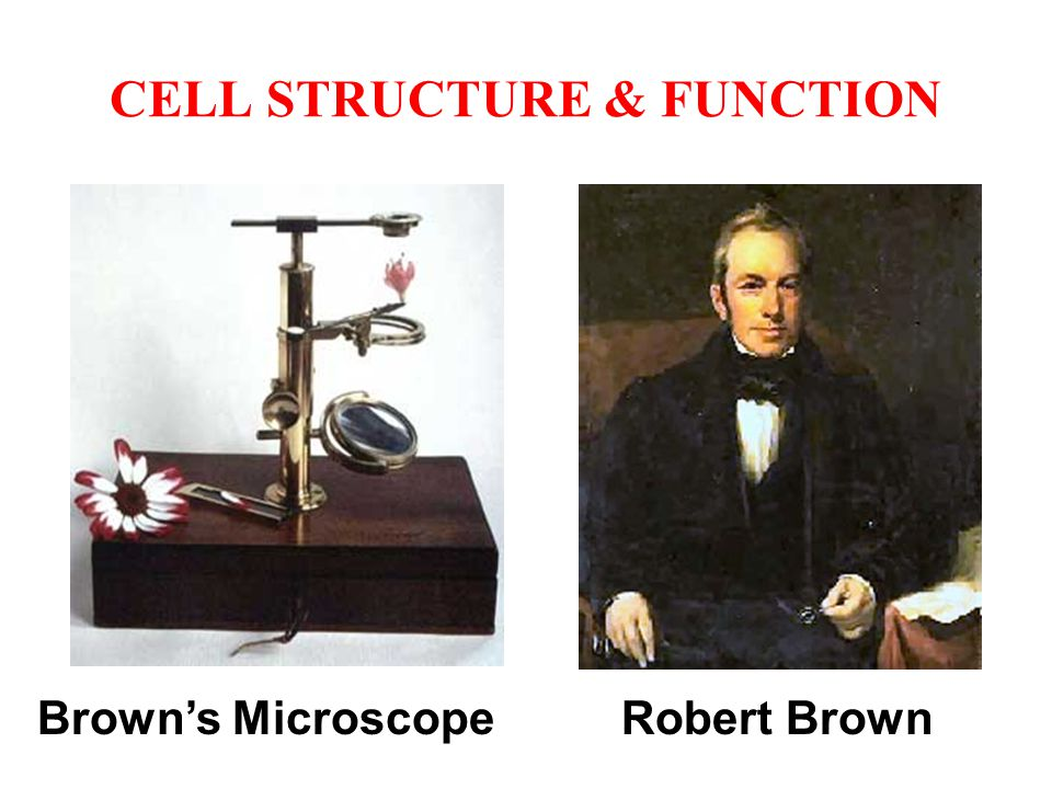 CELL STRUCTURE & FUNCTION Brown's Microscope Robert Brown