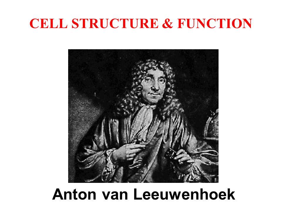 CELL STRUCTURE & FUNCTION Anton van Leeuwenhoek