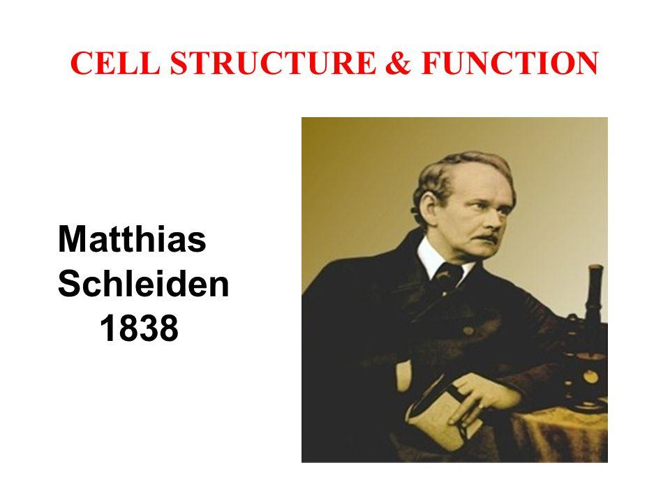 CELL STRUCTURE & FUNCTION Matthias Schleiden 1838