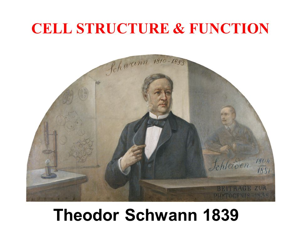 CELL STRUCTURE & FUNCTION A small cell has a greater ratio of surface area to volume than a large cell of the same shape.