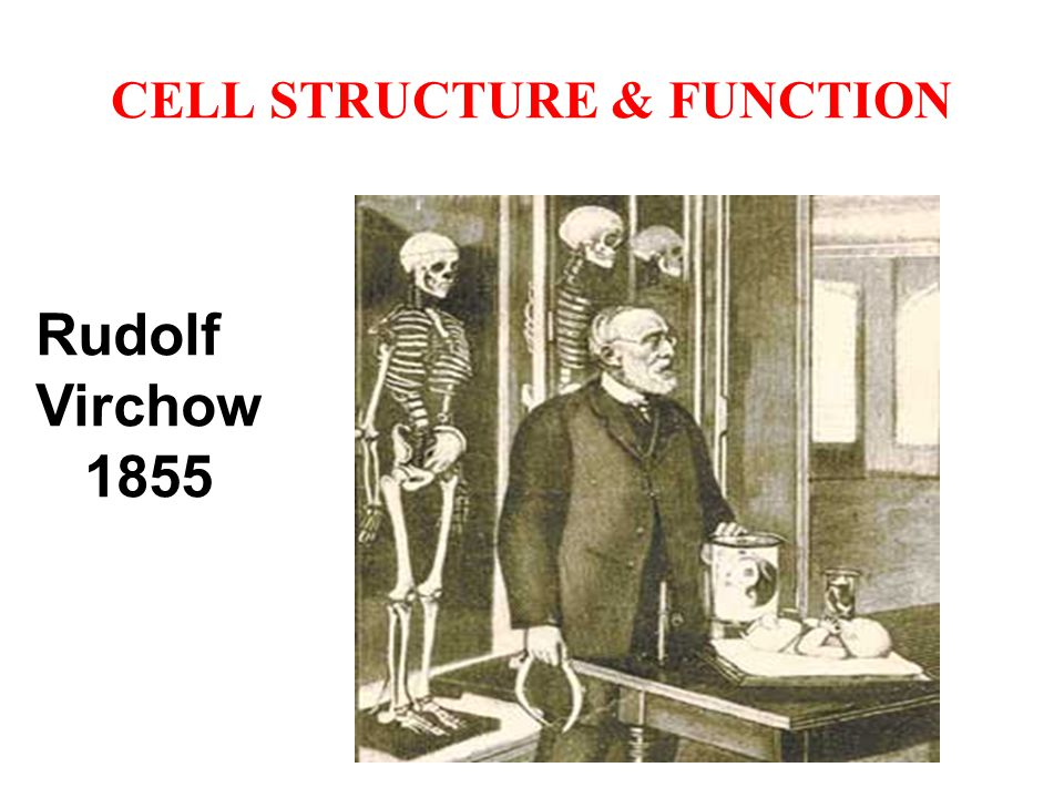 CELL STRUCTURE & FUNCTION CELL STRUCTURES: 1.