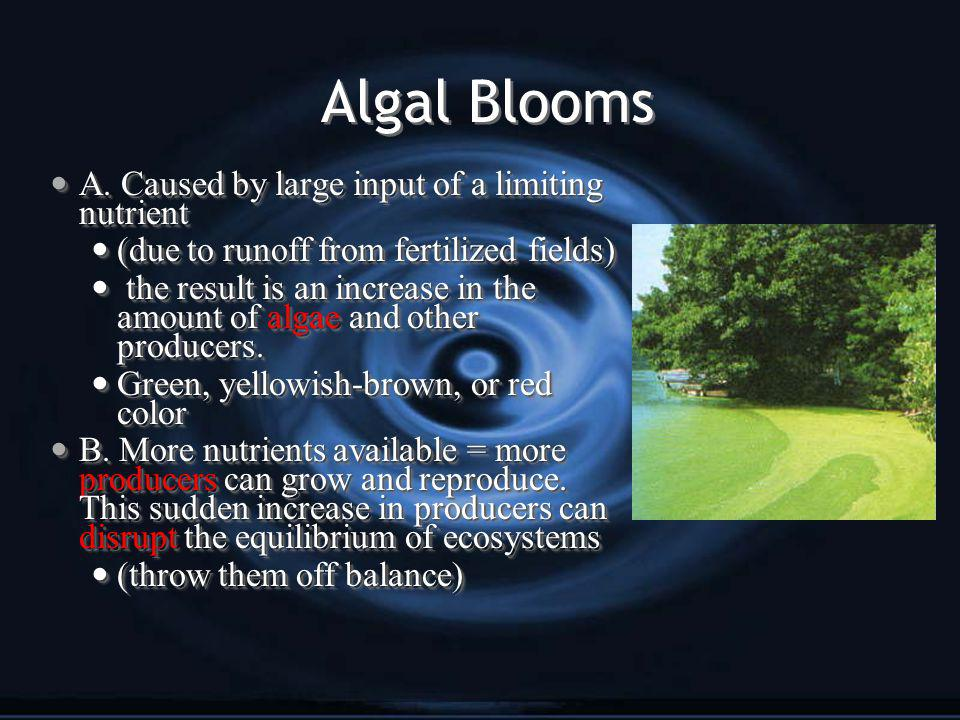 Algal Blooms A. Caused by large input of a limiting nutrient A.