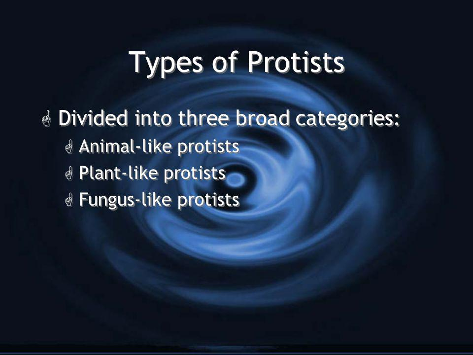 Animal-like Protists G Also known as Protozoa G Unicellular but move around, consume other organisms, and have no chloroplasts G Also known as Protozoa G Unicellular but move around, consume other organisms, and have no chloroplasts