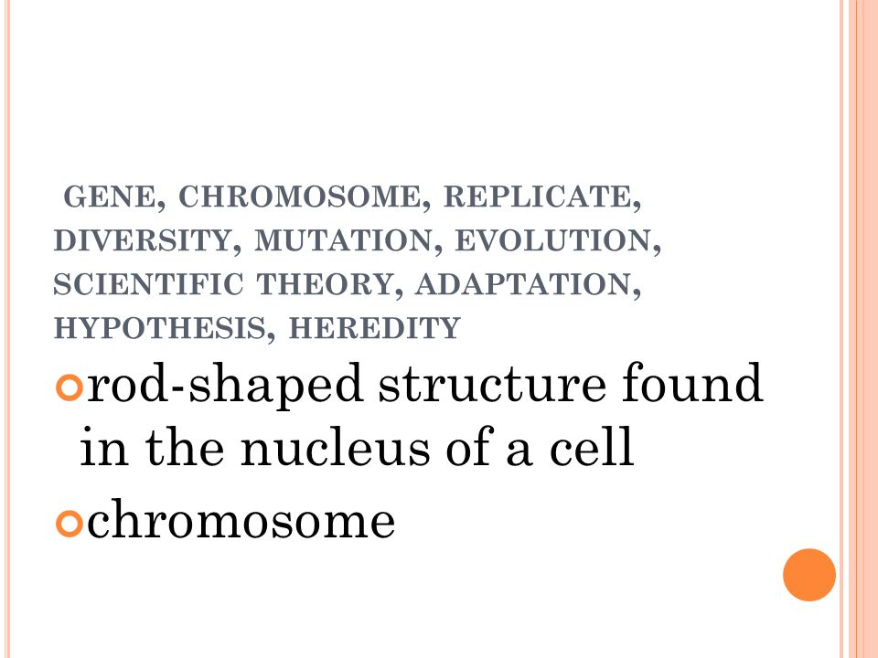GENE, CHROMOSOME, REPLICATE, DIVERSITY, MUTATION, EVOLUTION, SCIENTIFIC THEORY, ADAPTATION, HYPOTHESIS, HEREDITY rod-shaped structure found in the nucleus of a cell chromosome