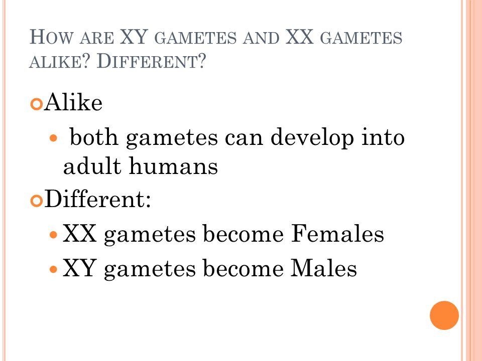 H OW ARE XY GAMETES AND XX GAMETES ALIKE . D IFFERENT .