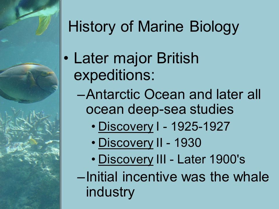 History of Marine Biology Later major British expeditions: –Antarctic Ocean and later all ocean deep-sea studies Discovery I - 1925-1927 Discovery II