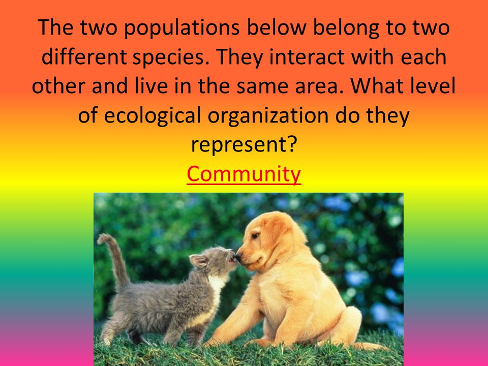 The two populations below belong to two different species. They interact with each other and live in the same area. What level of ecological organizat