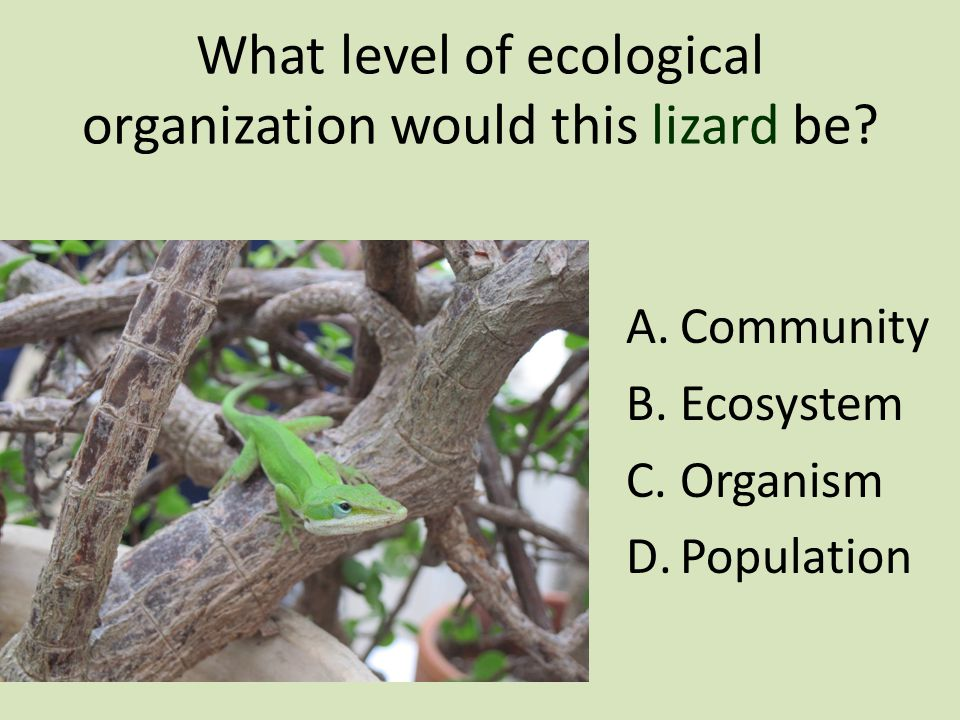 What level of ecological organization would this lizard be.