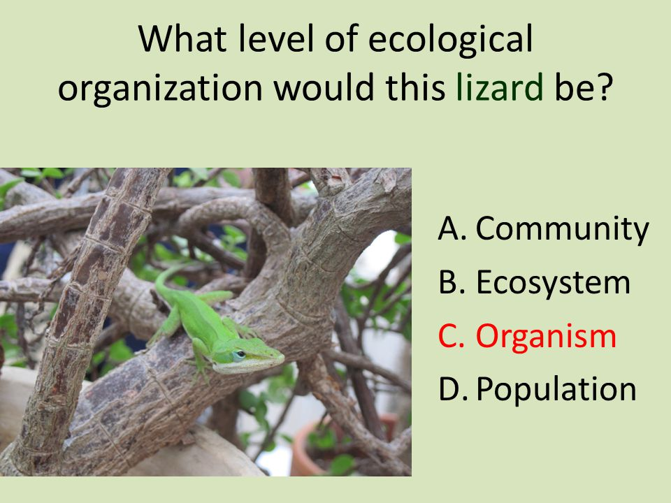 Identify the levels of ecological organization in this picture: 1.