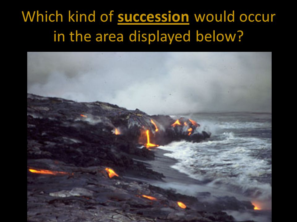 Which kind of succession would occur in the area displayed below?