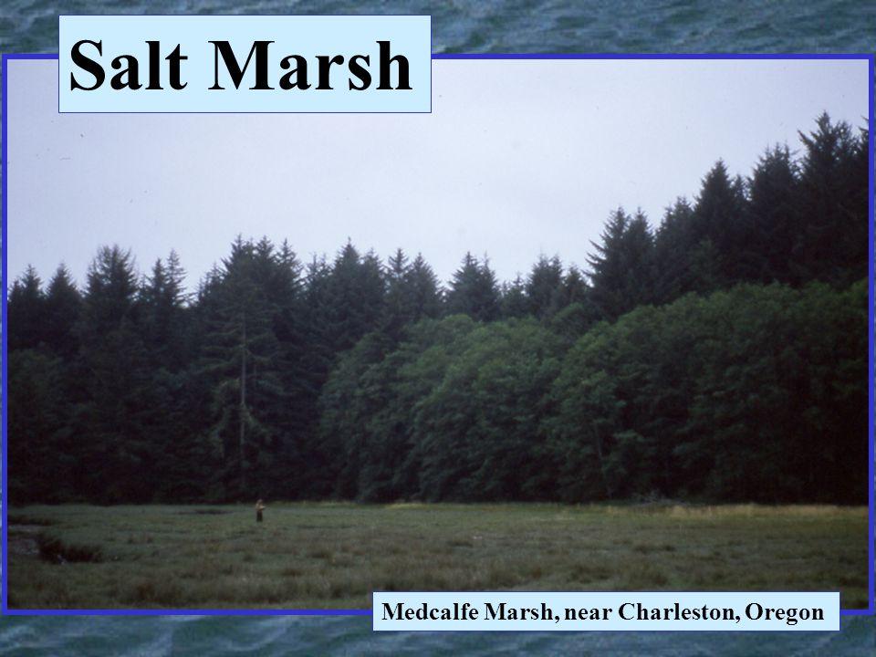 Medcalfe Marsh, near Charleston, Oregon Salt Marsh