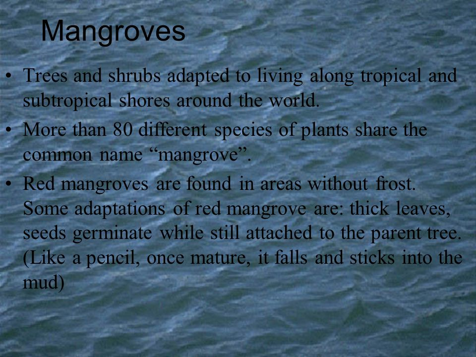 Mangroves Trees and shrubs adapted to living along tropical and subtropical shores around the world. More than 80 different species of plants share th